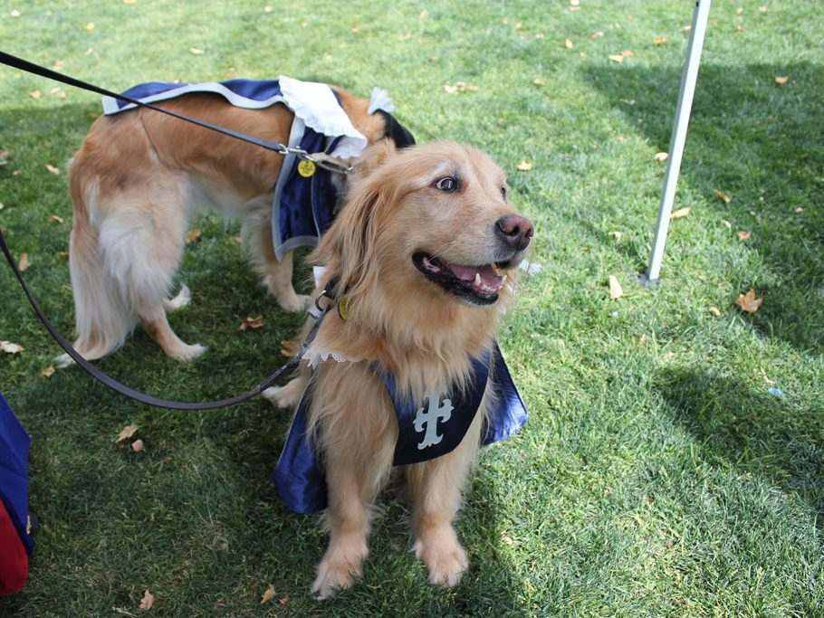 Golden Retriever MUTTsketeer therapy dogs Indy (left) and Angel (right) relax in the shade, enjoying pets and treats. (Taya Buehler-Reagan)